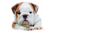 perro-leishmania