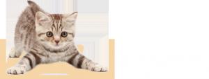 clinica veterinaria ciudad de los angeles