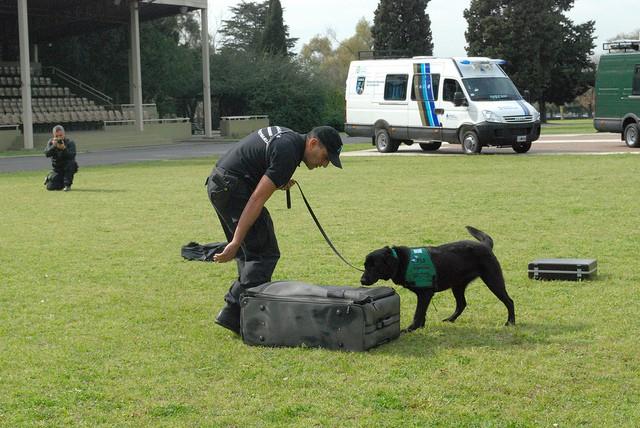 perro-explosivos