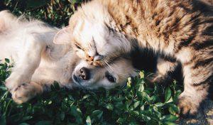 Beneficios de la esterilización en perros y gatos