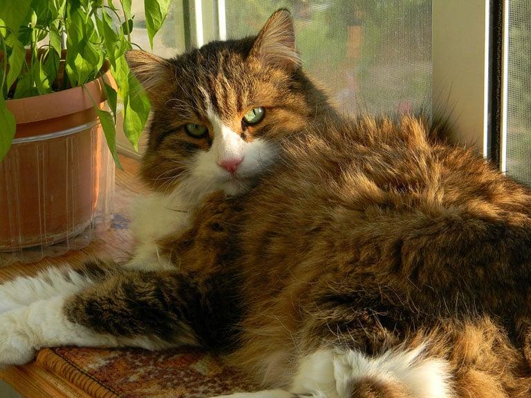 Principales cuidados para un gato en verano