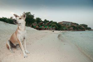 Evita lesiones de tu perro en la playa
