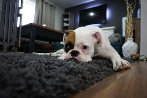 Solucionar estrés por separación en perros