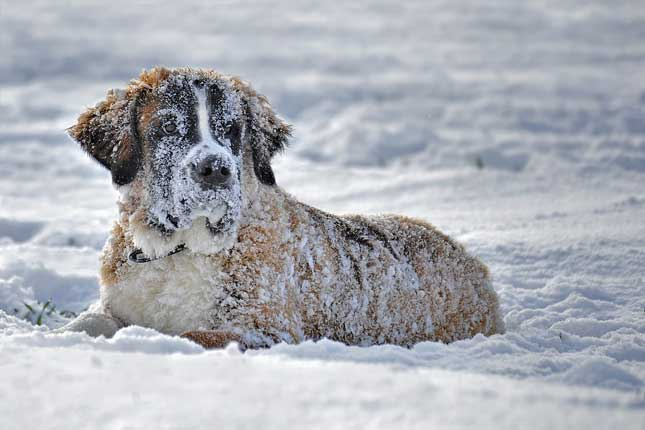 Proteger a tu perro del frío