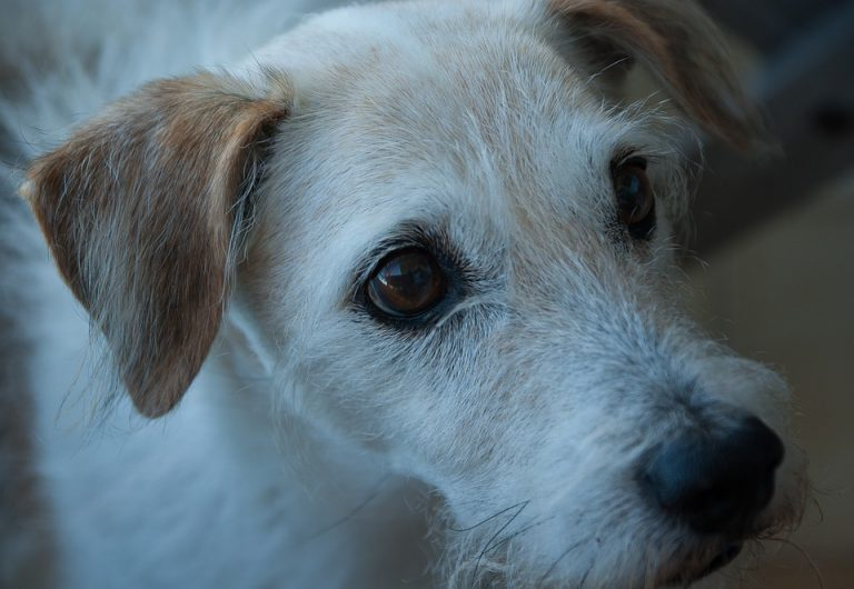 cuidados perro anciano
