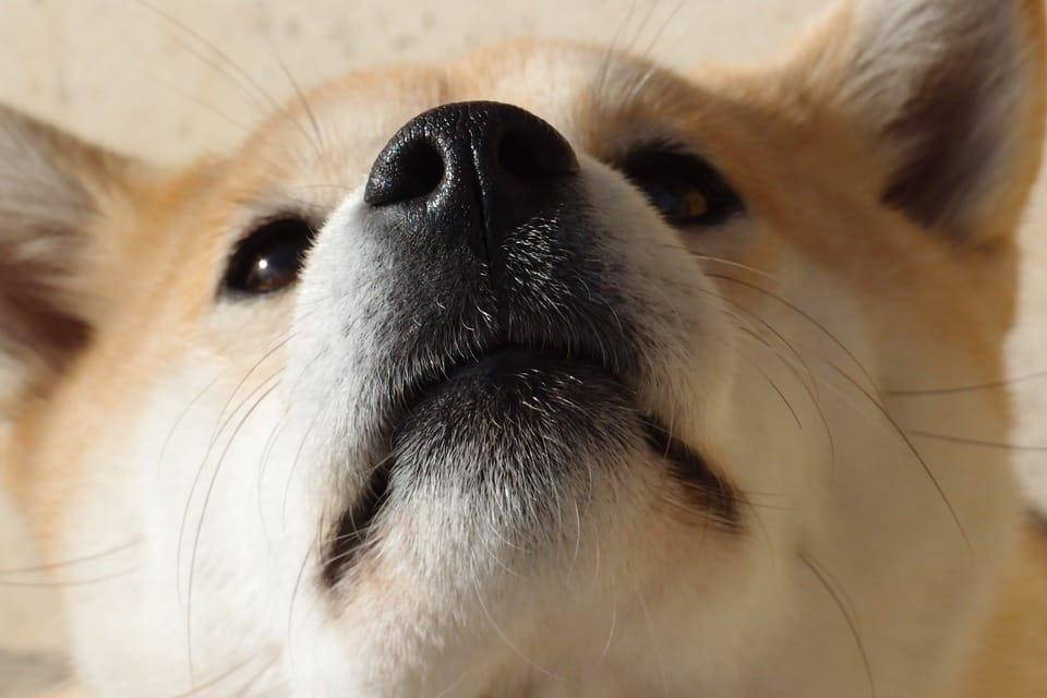 Foto de perro oliendo el objetivo de la camara