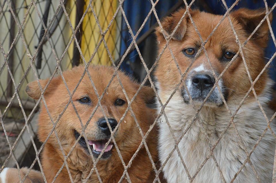 perros en una perrera