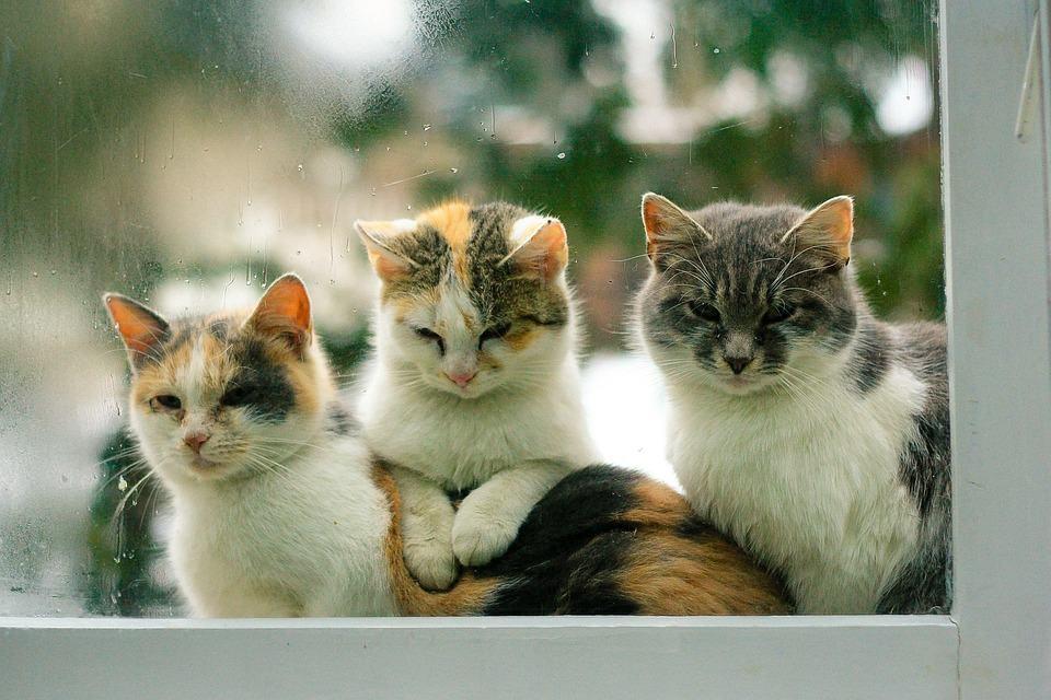 gatos tristes y deprimdios