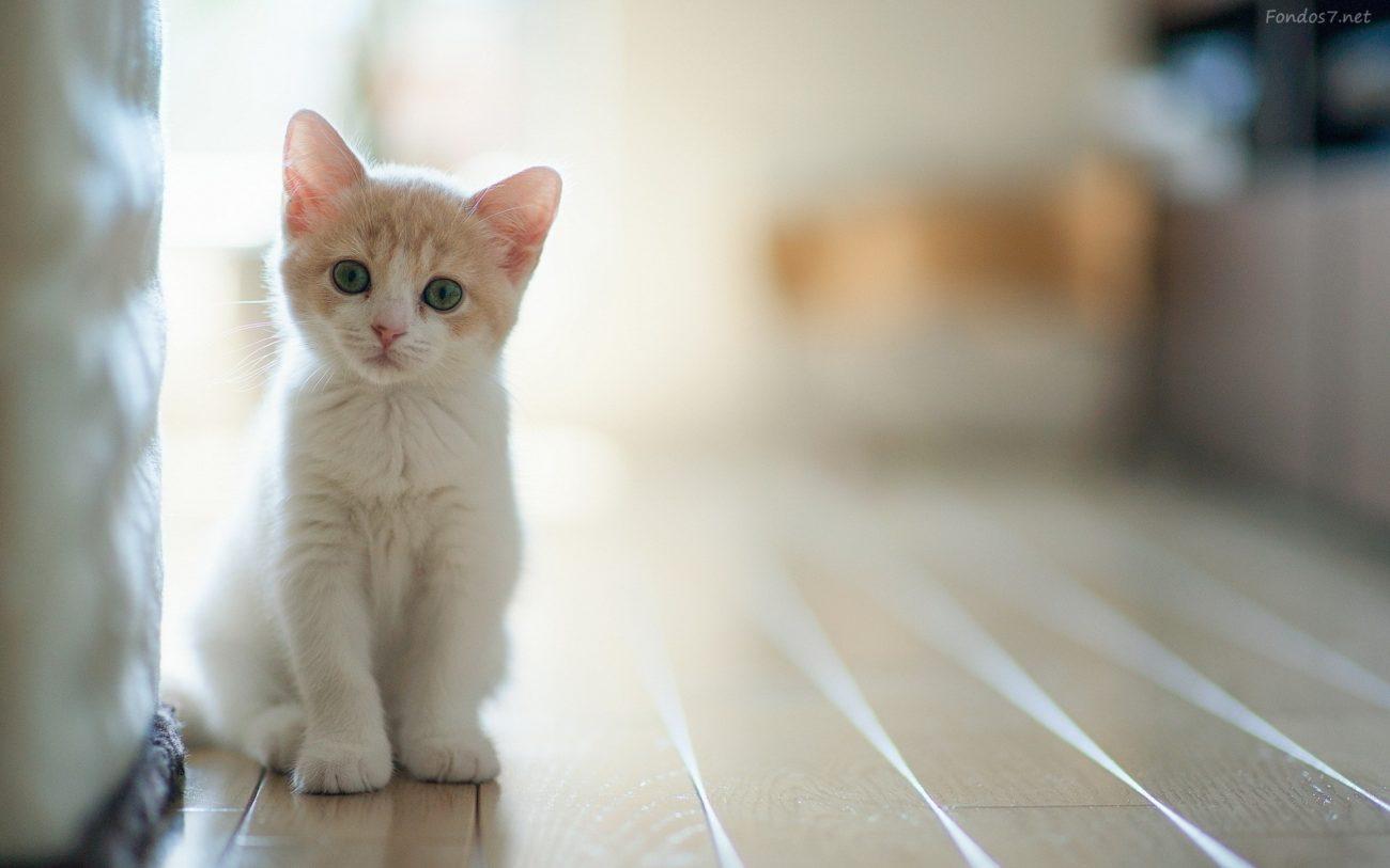 Un gato puede vivir hasta 20 0 25 años.