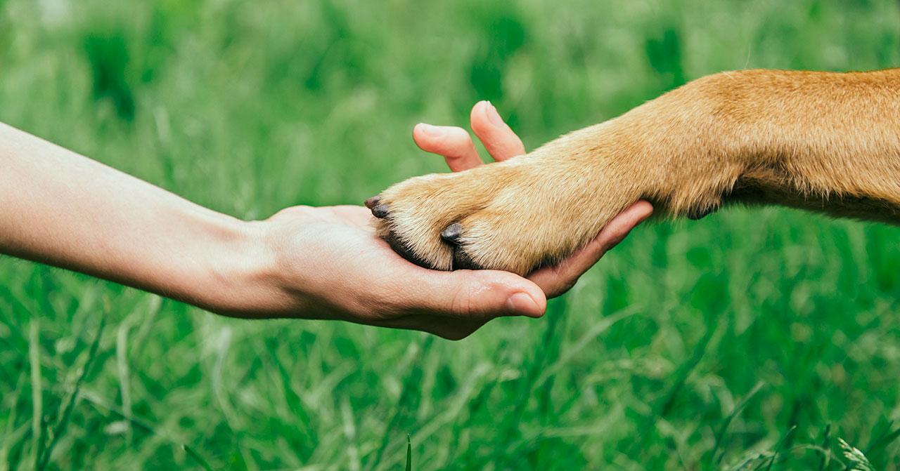 Adopta perros, no los compres.