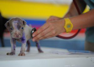 perrito en veterinario