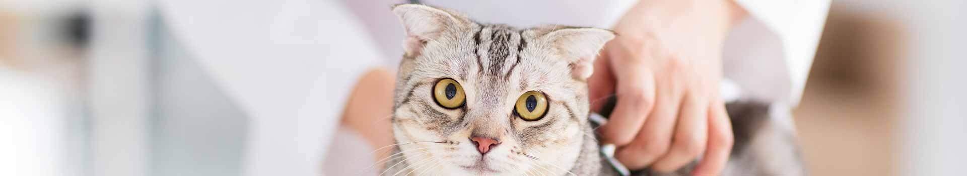 enfermedades tracto digestivo gatos