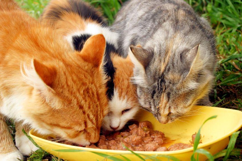 Alimentación mascotas