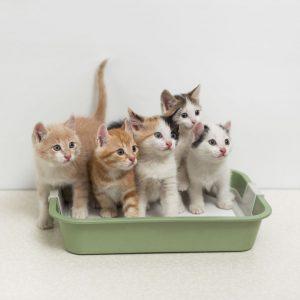 arenero gatitos