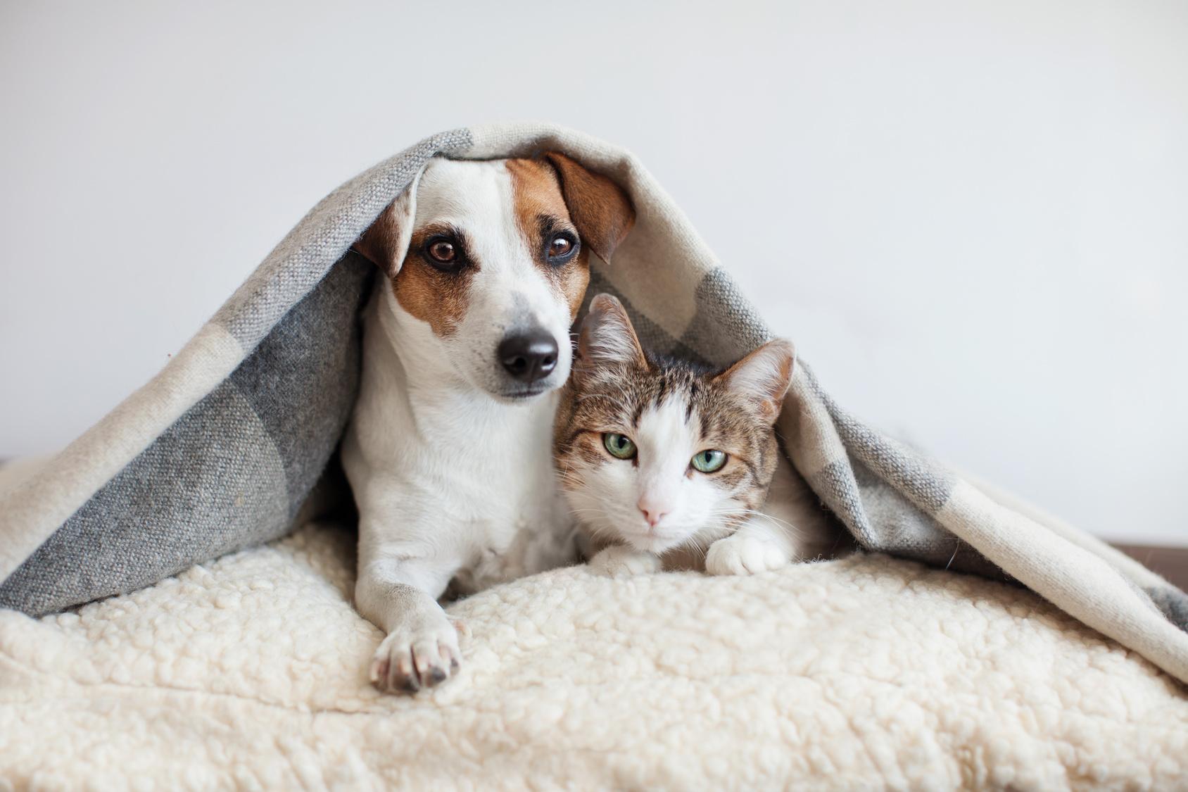 mascotas parásitos internos