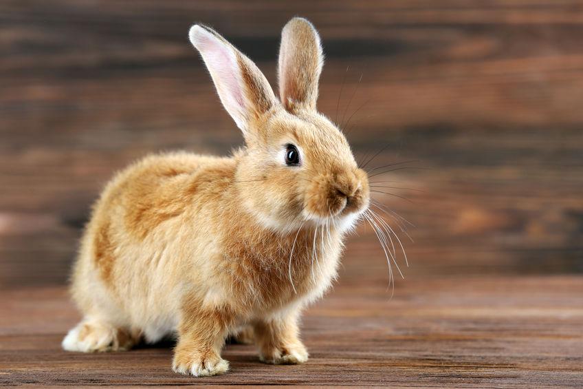 Lenguaje corporal conejos