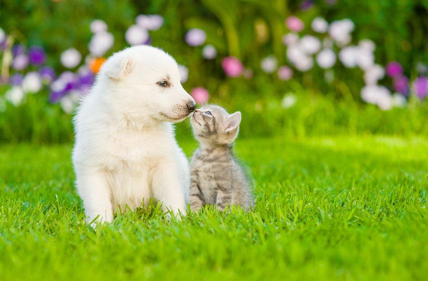 filariosis perros gatos enfermedad parásitos