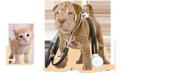 Clínica Veterinaria Ciudad de los Ángeles - Clínica veterinaria
