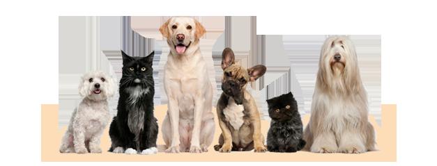 Clínica veterinaria Ciudad de los Ángeles - Urgencias veterinarias 24 horas